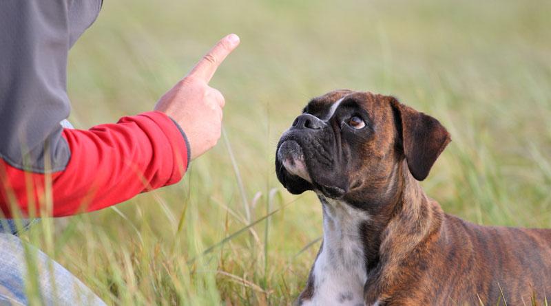 Почему собака ест свой кал — основные причины, что делать