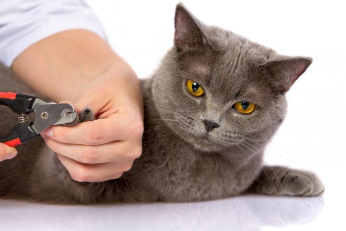 Коту обрезают когти