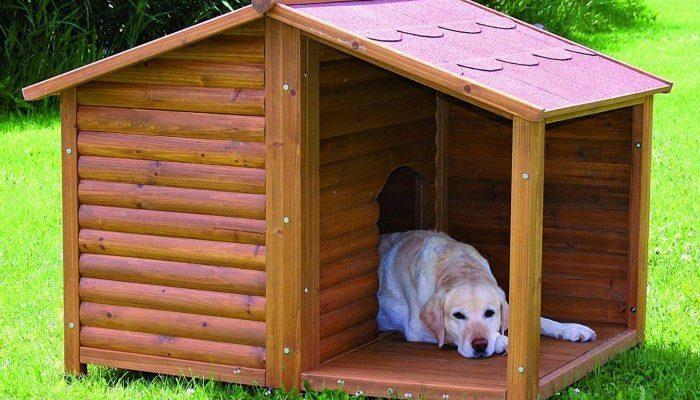 Пёс лежит в будке