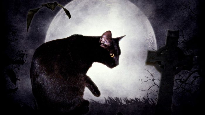 Приметы про то, почему коты уходят умирать из дома