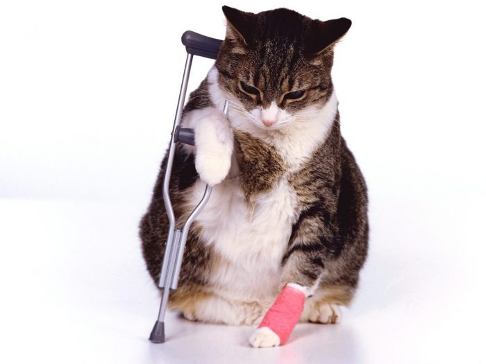Кошка с костылем