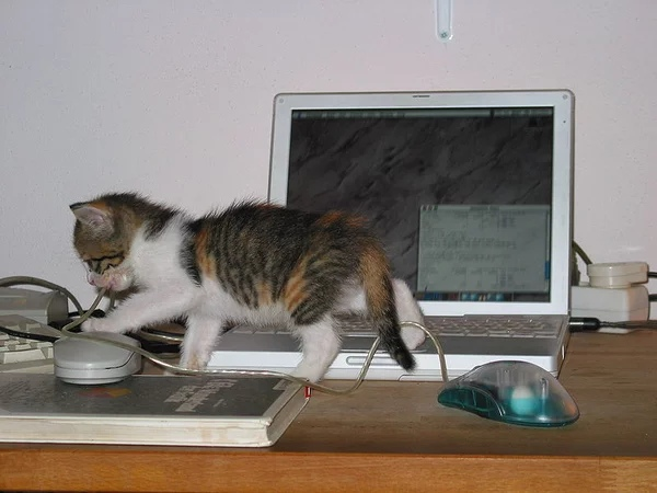 Котёнок грызёт провод от мышки
