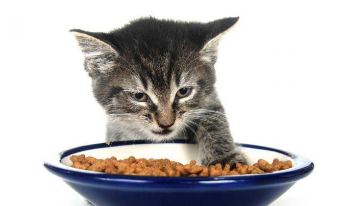 Котенок и миска