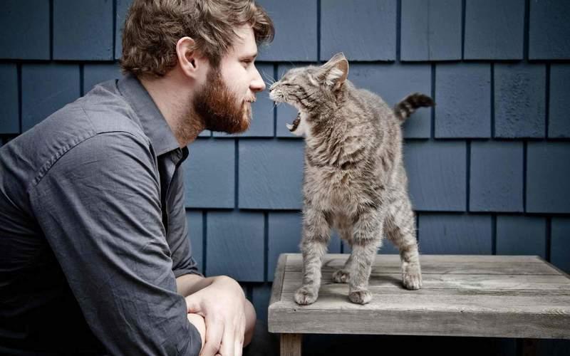 Почему кошка не любит сидеть на руках у человека