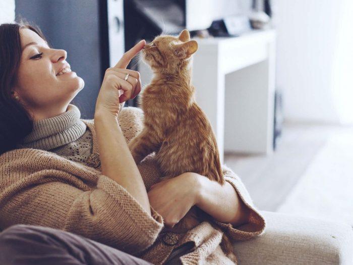 Кошка сидит на руках у девушки