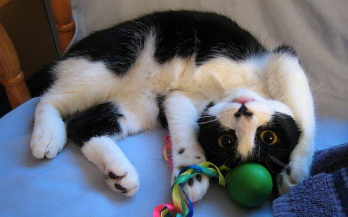 Кот и игрушкой