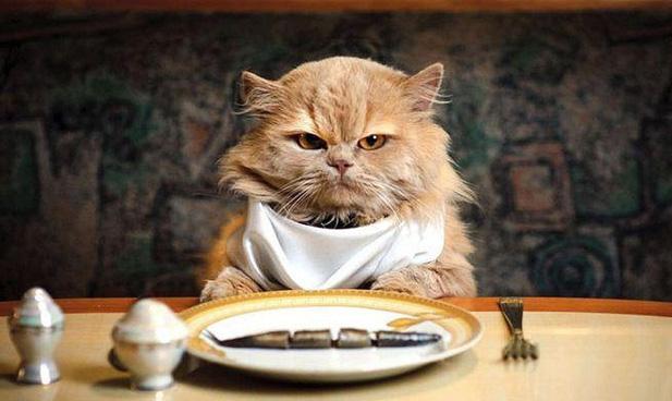 Кошка за столом