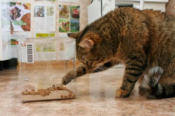 Кошка достает еду