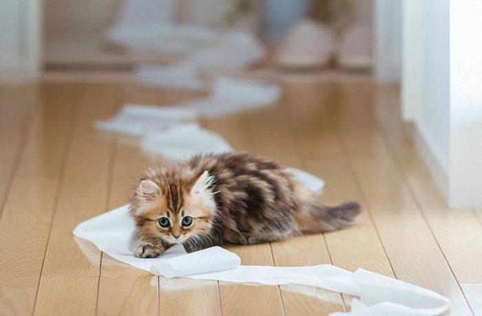 Котенок не понимает, почему ему нельзя играть с туалетной бумагой