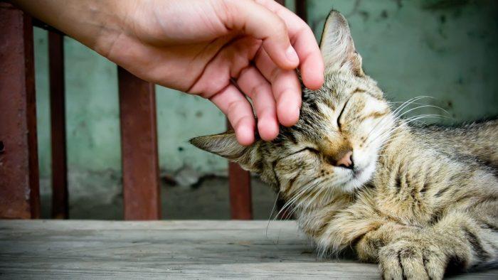 Рука и котенок