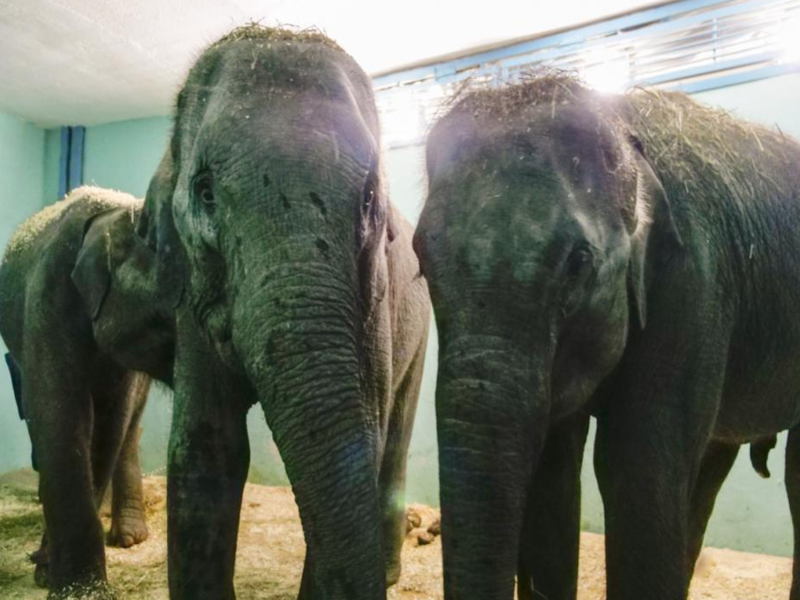 Московский театр зверей объявляет именной конкурс на лучшие клички для слоних