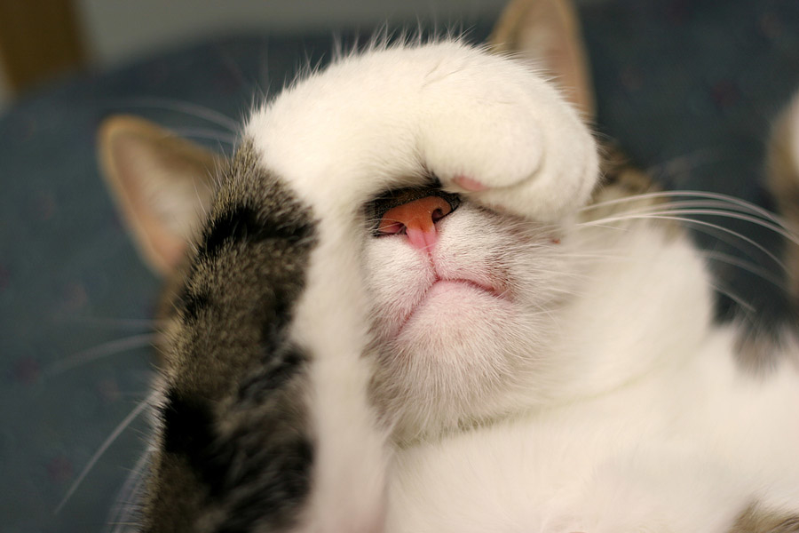 кошка с закрытыми глазами