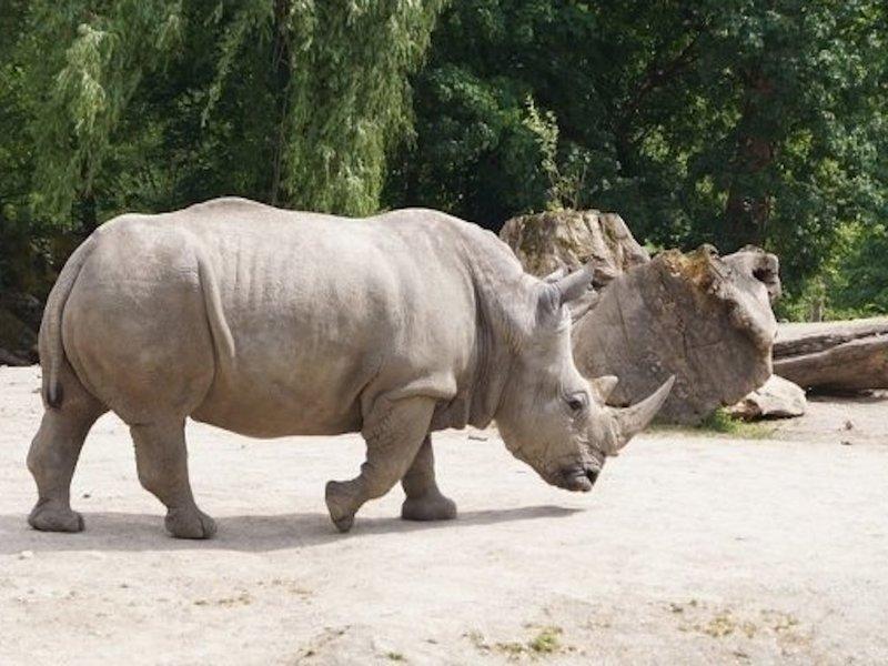 Как ребёнок оказался за ограждением у носорогов: куда смотрят родители
