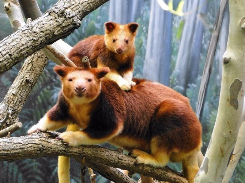 Редкие и необычные животные