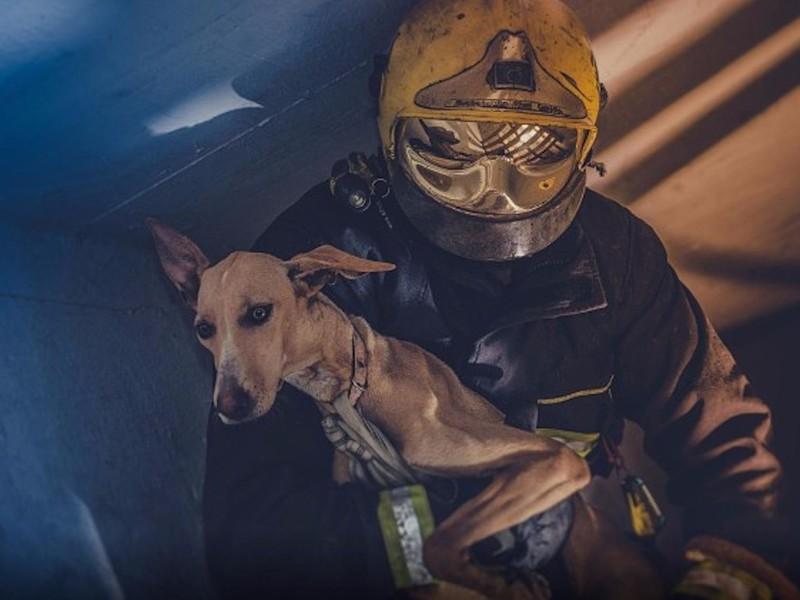 Псу удалось выжить в результате обрушения здания в Челябинской области