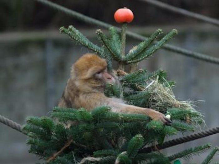 Праздник продолжается: спецугощения для жителей берлинского зоопарка