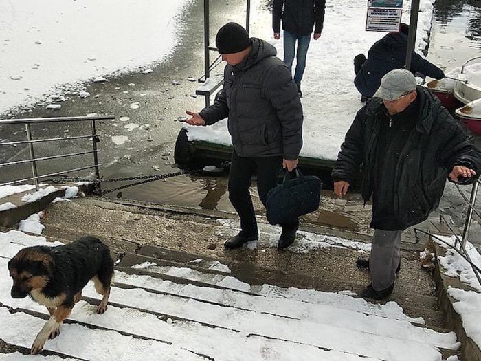 Собака ушла со своим спасителем