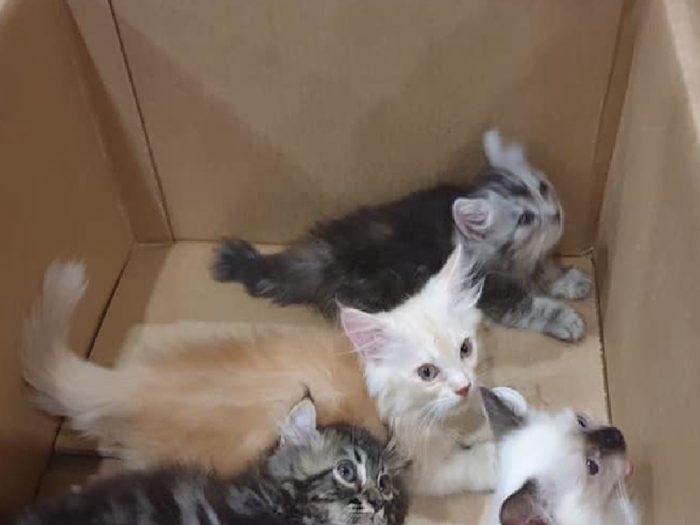 Котят передали в ветеринарную службу аэропорта Сингапура