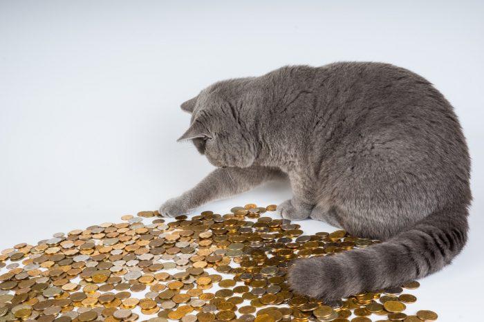 Кошка с монетами