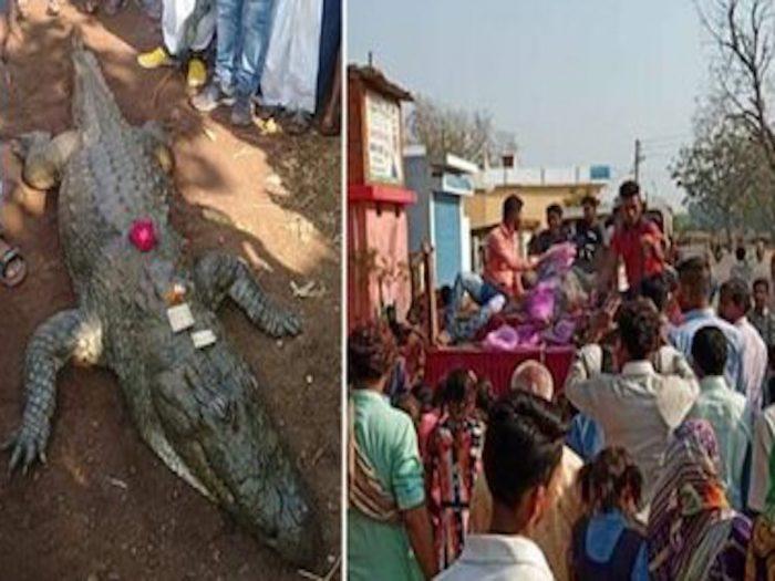 По словам местных жителей, крокодил отличался дружелюбием