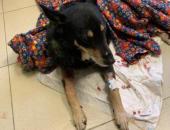 Заражённый бешенством мужчина продолжит помогать животным