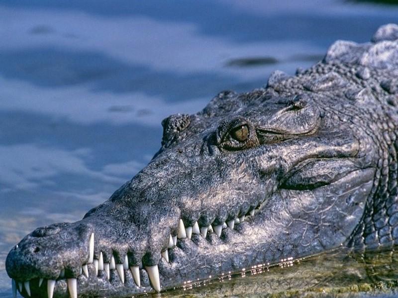 В индонезийском научном центре биолог стала жертвой крокодила
