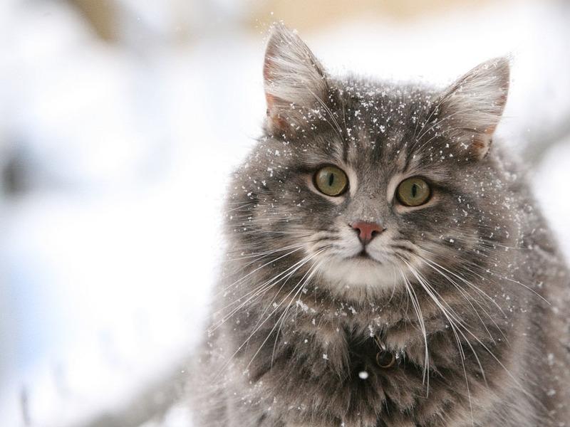 Самые забавные кошки: подборка фото
