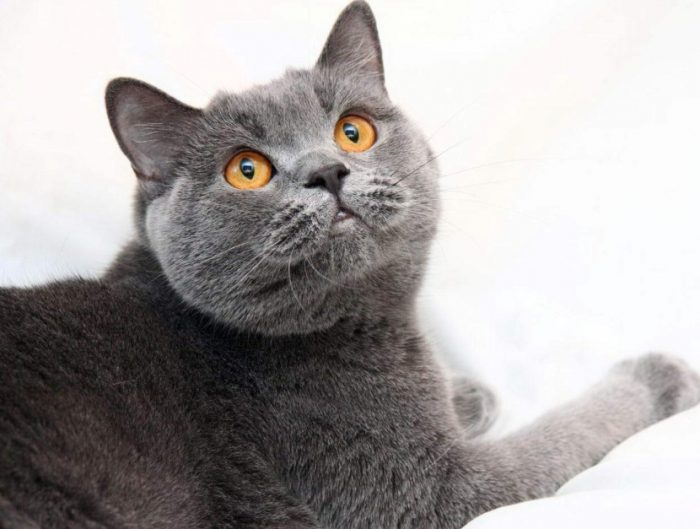 кошка наблюдает