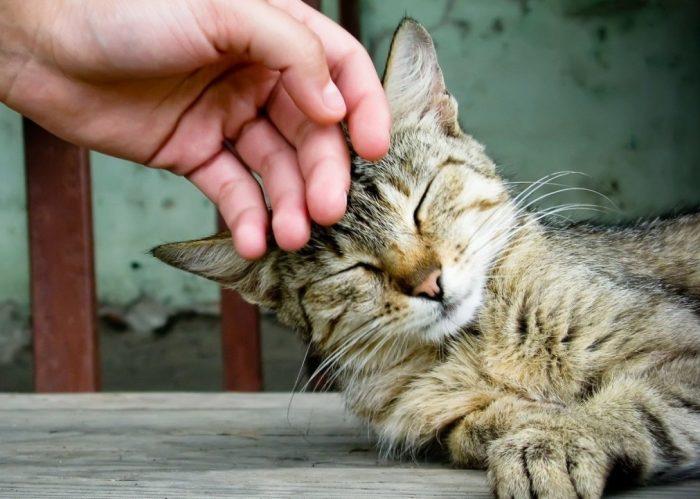 кошка трется о руку хозяина