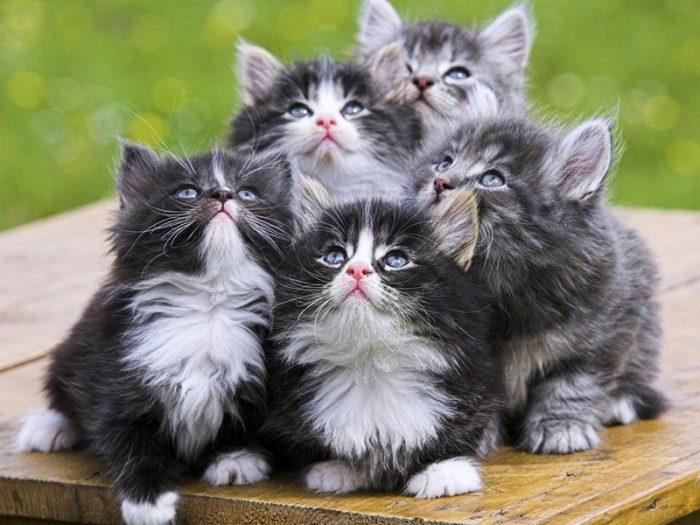 Котята мечтают поохотиться