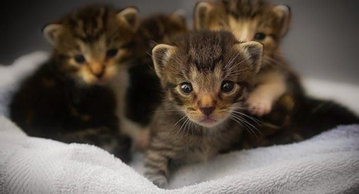 Котята-тигрята в норе из одеяла