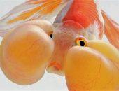 Висарут Ангкатаванич рыбки