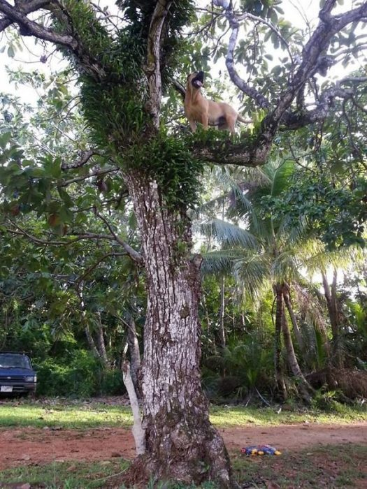 Собака залезла на дерево