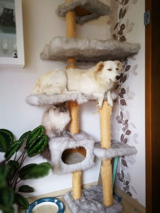 Собака и кот на кошачьей горке