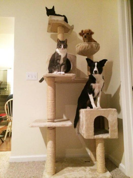 Собаки и кошки сидят на кошачьем домике