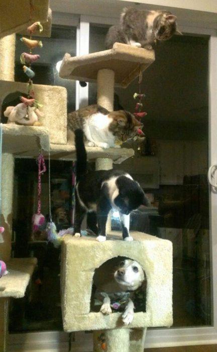 Собака в кошачьем домике
