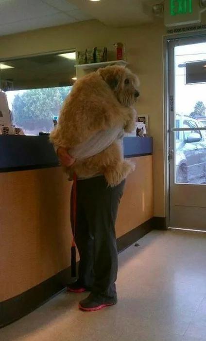 Собака на руках человека