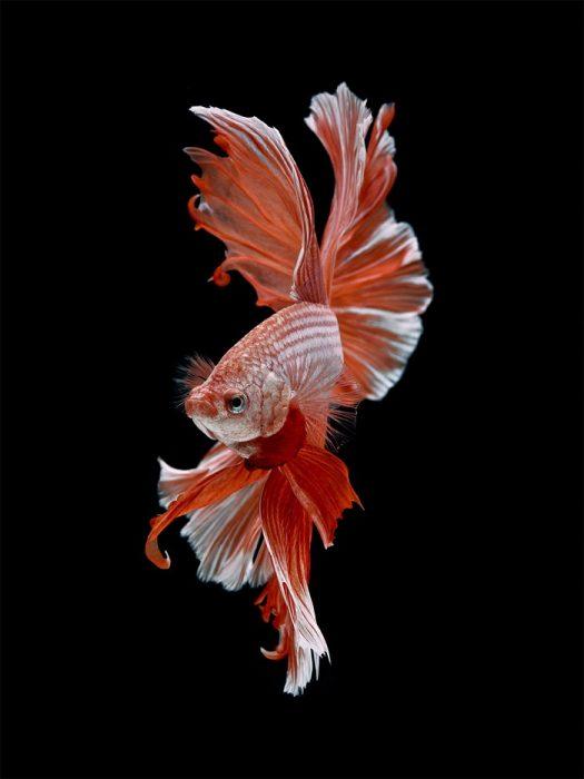 Рыбки на фото Висарута Ангкатаванича