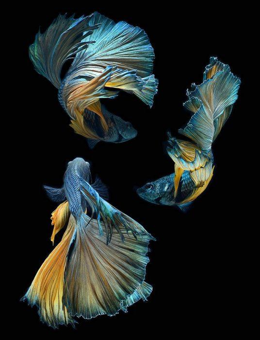 Аквариумные рыбки на фото Висарута Ангкатаванича