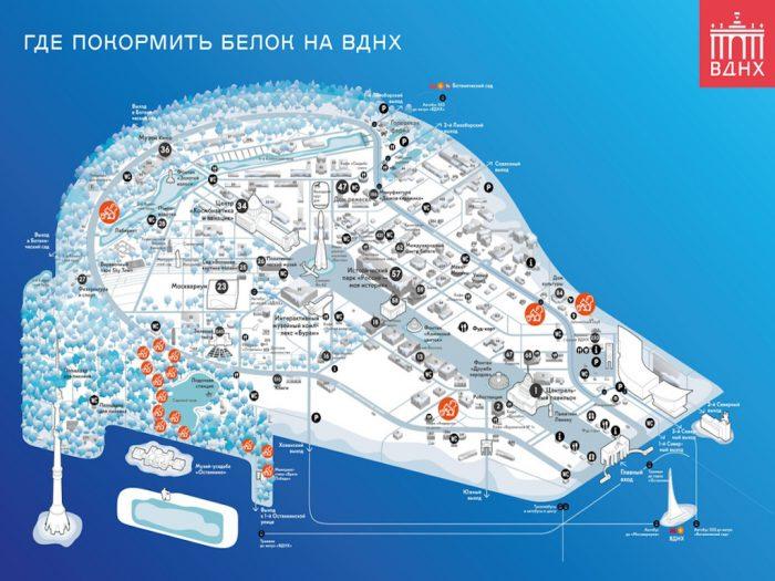 Карта с расположением кормушек для белок