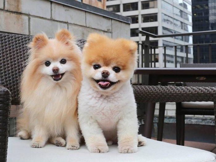 Самый милый в мире пес очень тяжело переживал утрату, он почти отказался от еды и сильно заболел. Слева Бадди