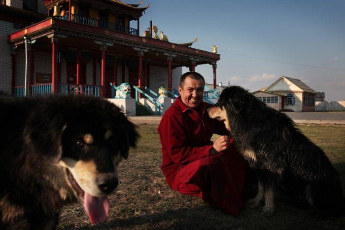 Бурят-монгольские волкодавы в питомнике