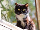 Контроль потомства: в Москве официально открыли бесплатный пункт стерилизации кошек и собак