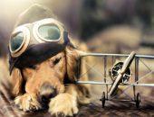 Собака-поводырь не бросила своего хозяина даже в самолёте и полетела рядом с ним