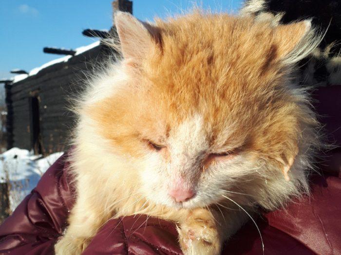 Волонтёры отмечают, что никто не решается взять кота к себе домой