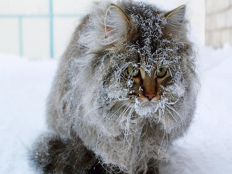 В Иркутской области подросток спас вмёрзшего в лёд кота