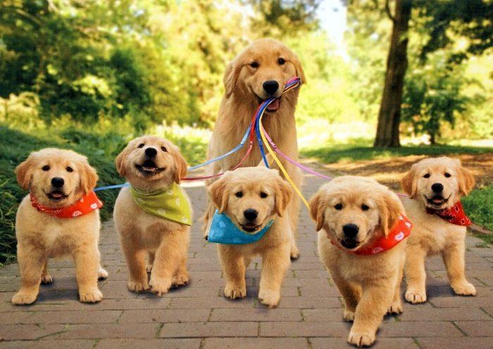 Собака с щенками на прогулке