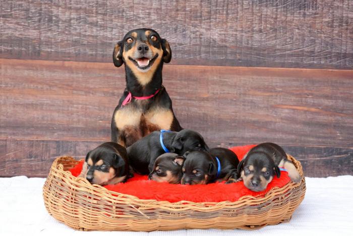 Собака с щенками в корзинке