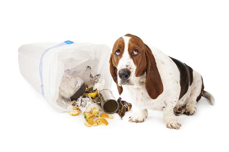 Выплюнь бяку: как отучить собаку копаться в мусоре