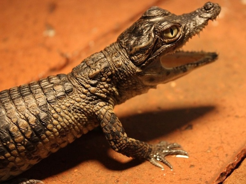 Работники мусороуборочной машины нашли на свалке тела змеи и крокодила